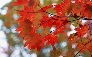 fall leaves for blog